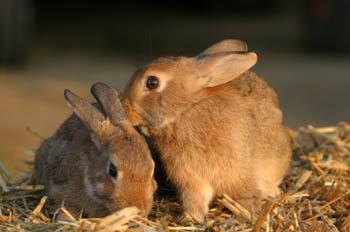 animal testing rabbits